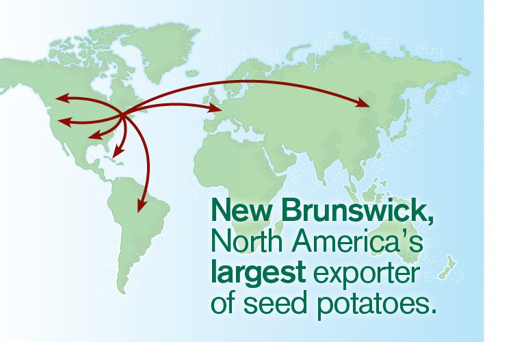 About the NB Seed Industry